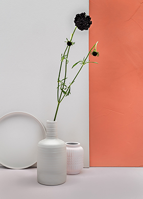 New paint colours Calm and Coral